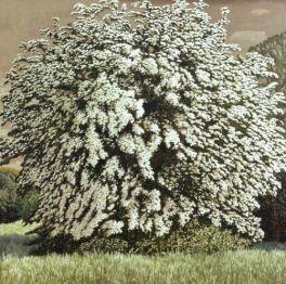 May Tree II