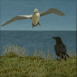 Raven and Gannet