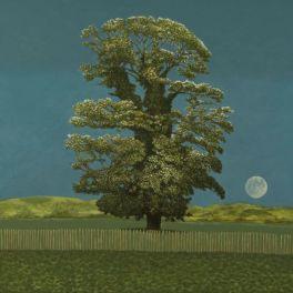 Avebury Tree and Moon